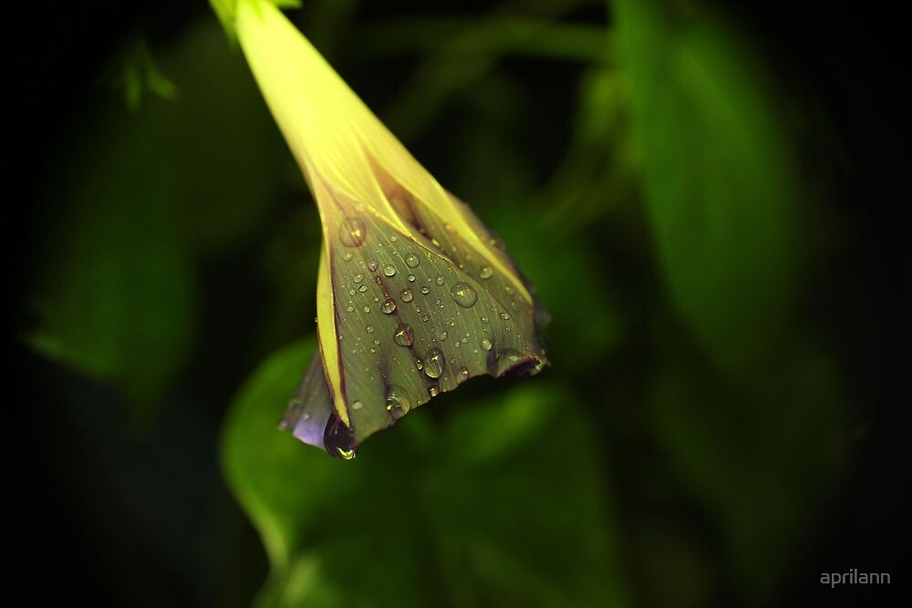 Rainy Morning - Daily Homework - Day 23 - May 30, 2012 by aprilann