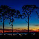 Gulf Coast Sunset by Shari Galiardi