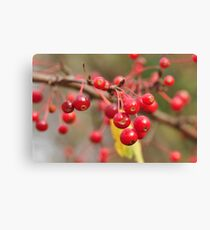 Bitter Cherries  Canvas Print