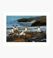 Seabirds Art Print