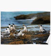 Seabirds Poster
