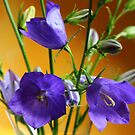 Balloon Flowers by karina5