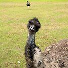 Emu (disambiguation) II by Kristy Dalpez
