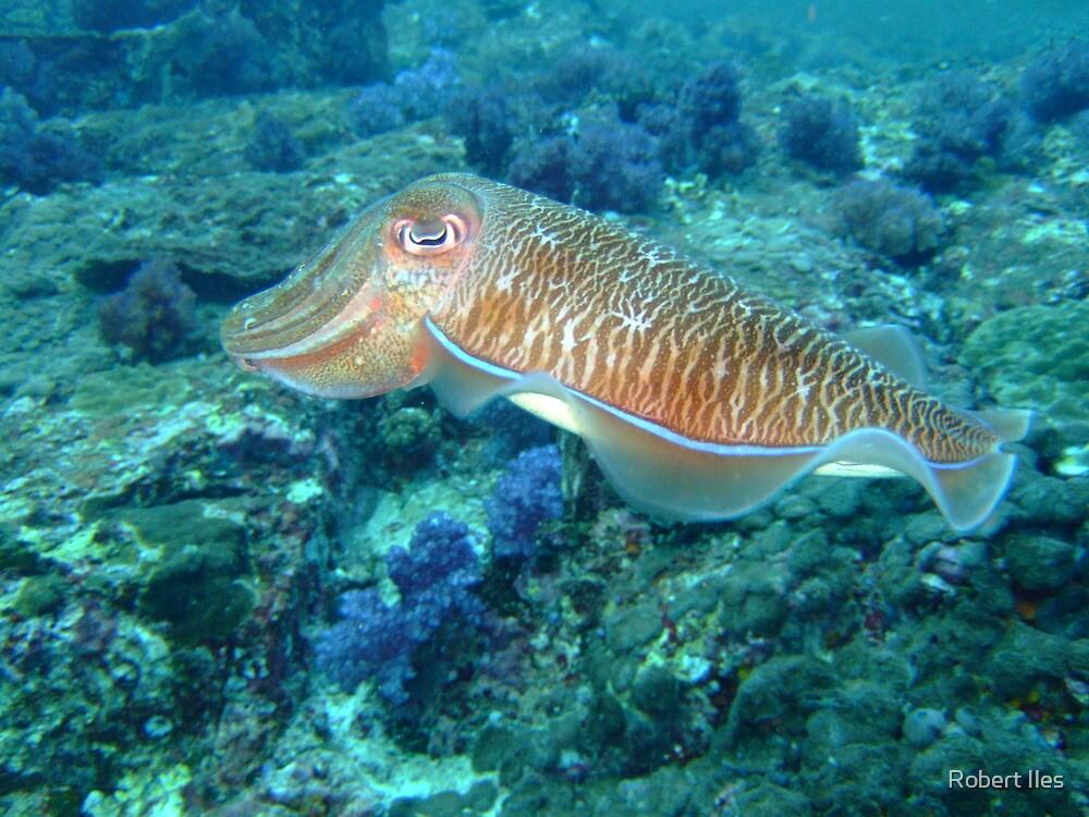 Cuttlefish by 07967110495 Iles