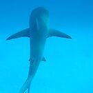 Shark 1 by Robert Iles