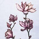 Spring Magnolia by ankastan