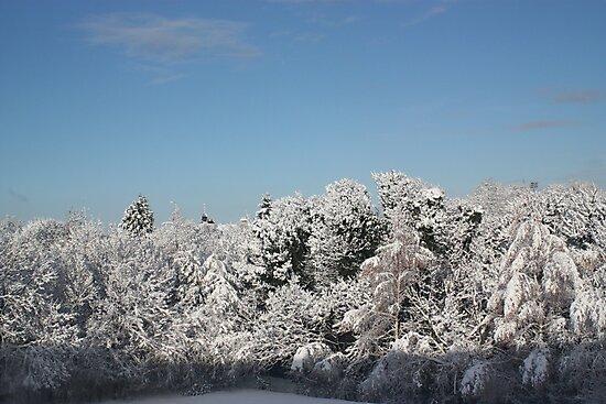 winter wonder land  by graham smith