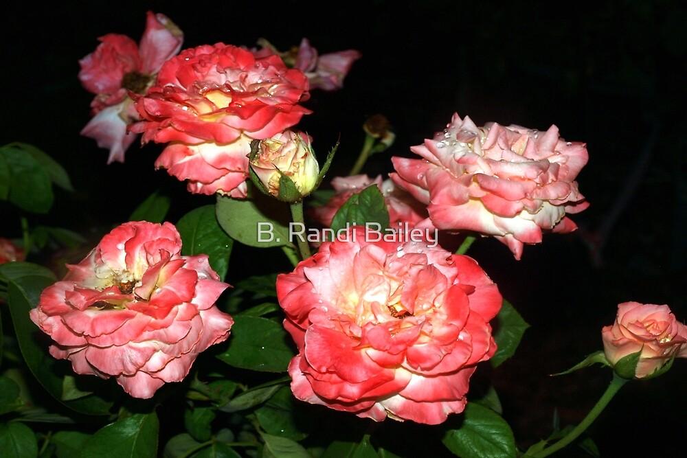 Peachy-pink rose bush by ♥⊱ B. Randi Bailey