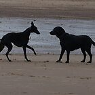 Acquaintance on the beach by flashcompact