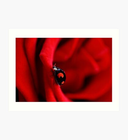 Black ladybug in red rose Art Print
