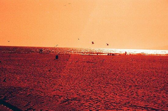 Venice Beach - Beauty by miramefotos
