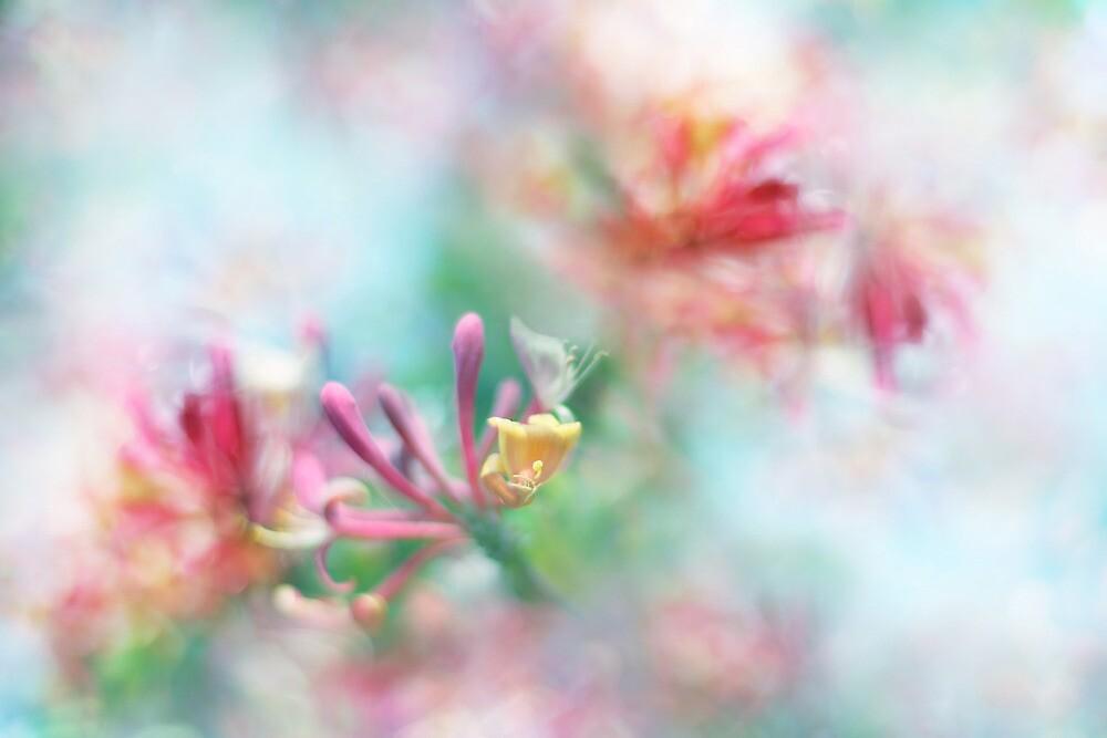 Soft as Honey by Sharon Johnstone