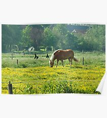 Horse in buttercup meadow Poster