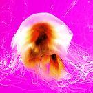 Jelly Dancer  by Stuart Baxter