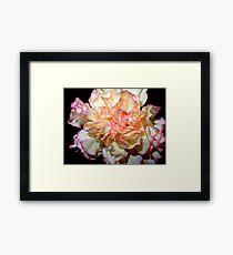 Sweet Carnation Framed Print