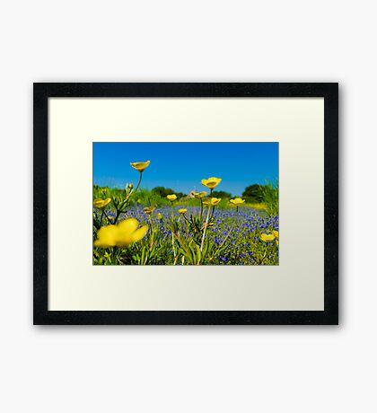Buttercup Meadow Framed Print