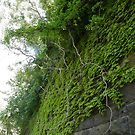 Sixth Street Embankment, Abandoned Pennsylvania Railroad Embankment, Jersey City, New Jersey by lenspiro