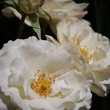 Peaceful Petals by AnnaRose