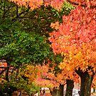 Blackheath Autumn by Dilshara Hill