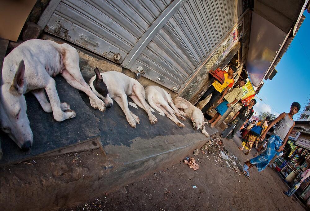 Slum dogs Mumbai by Heather Buckley