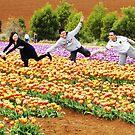Tiptoe through the tulips by Judi Rustage