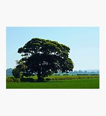 English counTREEside Photographic Print