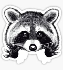 Little raccoon buddy Sticker