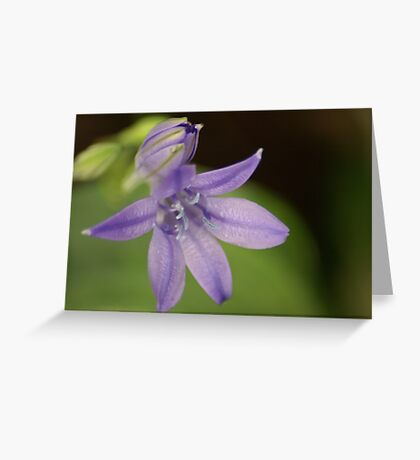 Purple Perfection Greeting Card