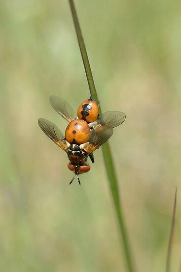 Flies by marens