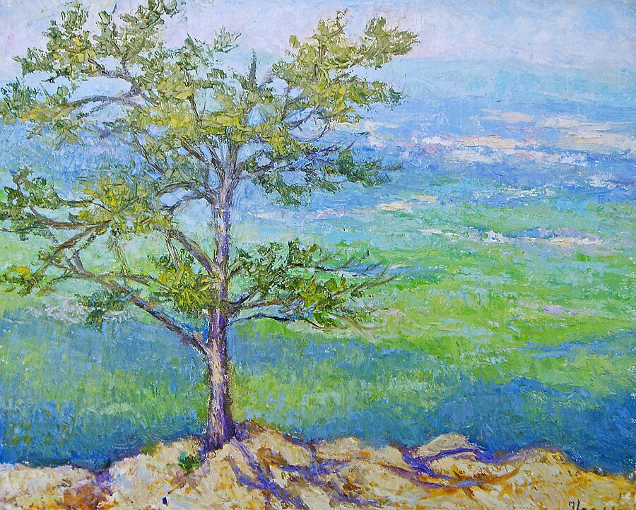 Pine tree in the mounains by Julia Lesnichy