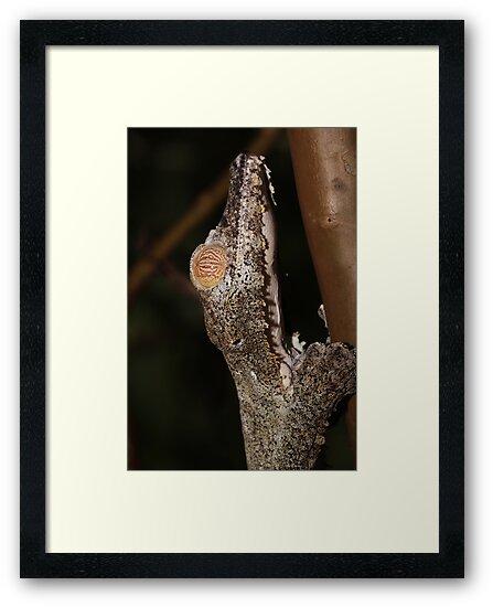 Yellow eye gecko by DarkChameleon