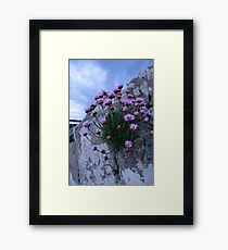 sea pink Framed Print