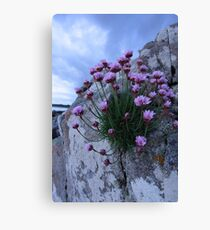 sea pink Canvas Print