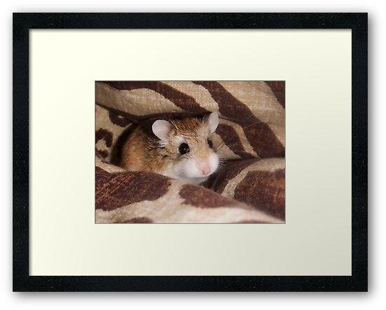 Cheese the Roborovski Hamster by Michaela1991