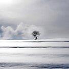 One Tree by Imi Koetz