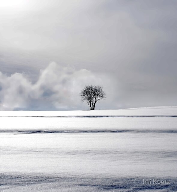One Tree by Imi Koetz