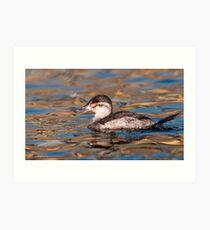 Ruddy Duck Art Print