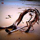 drift wood by kerrie black