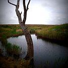 tree  by kerrie black