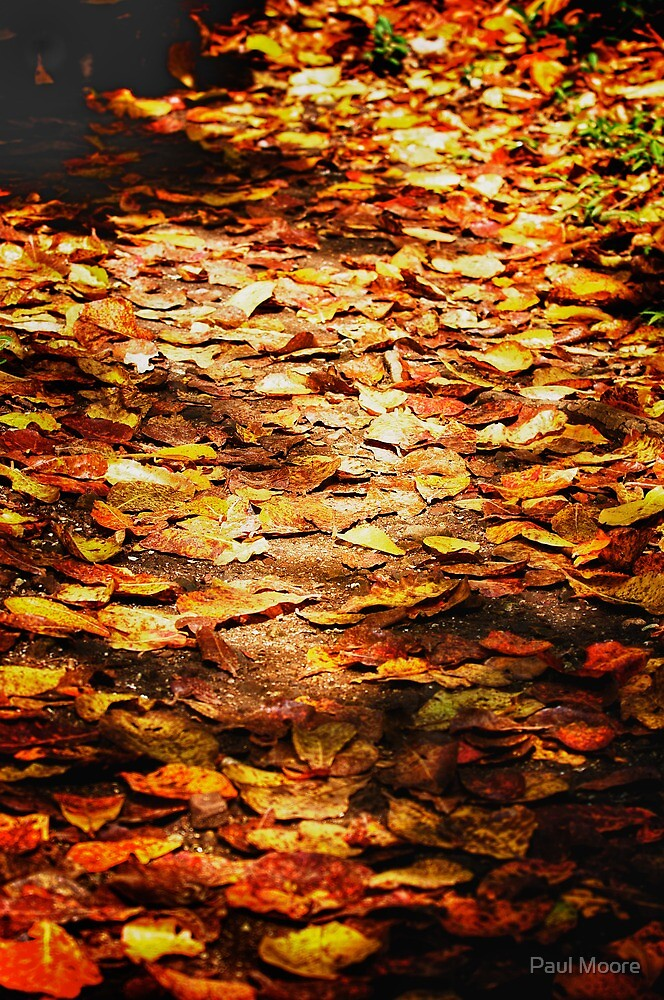 Autumn Colours by Paul Moore