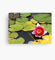 Beauty and the Lillie Pads Canvas Print