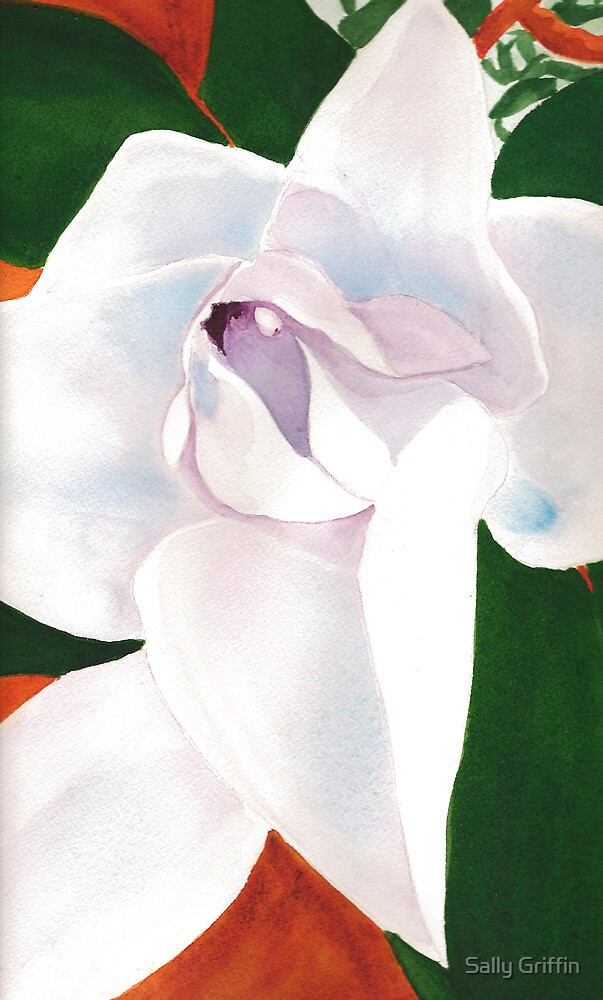 Magnolia, You Sweet Thing by Sally Griffin