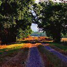 Light at the end of the Path by aprilann