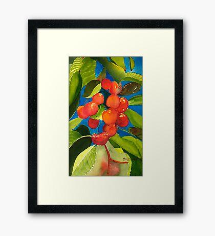 Rainier Rubies Framed Print