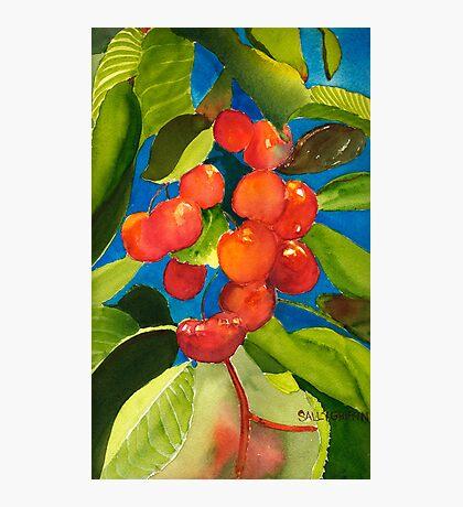 Rainier Rubies Photographic Print