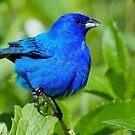 I'm Feeling Really Blue Today by John Absher
