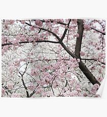 Cherry Blossoms 10 Poster