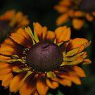 Orange & Brown by Sandra Fortier