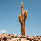 giant cacti by ashley reed