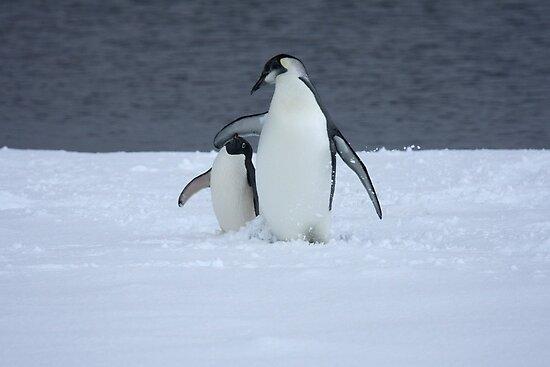 Grumpy little penguin by MagnuselMar